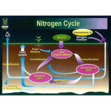 Simple Nitrogen Cycle